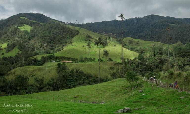 Valle de Cocora-21