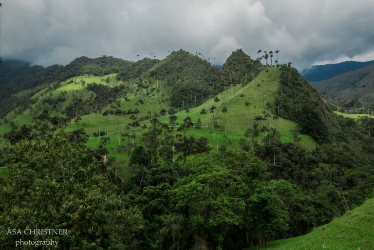 Valle de Cocora-27